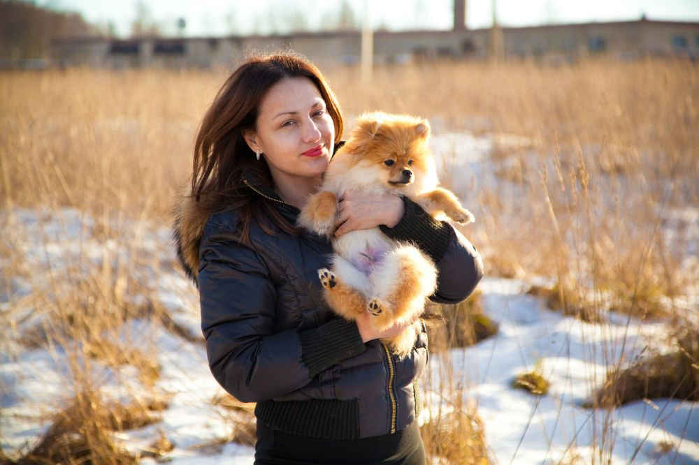 Hunderasse Spitz: ein treuer Begleiter