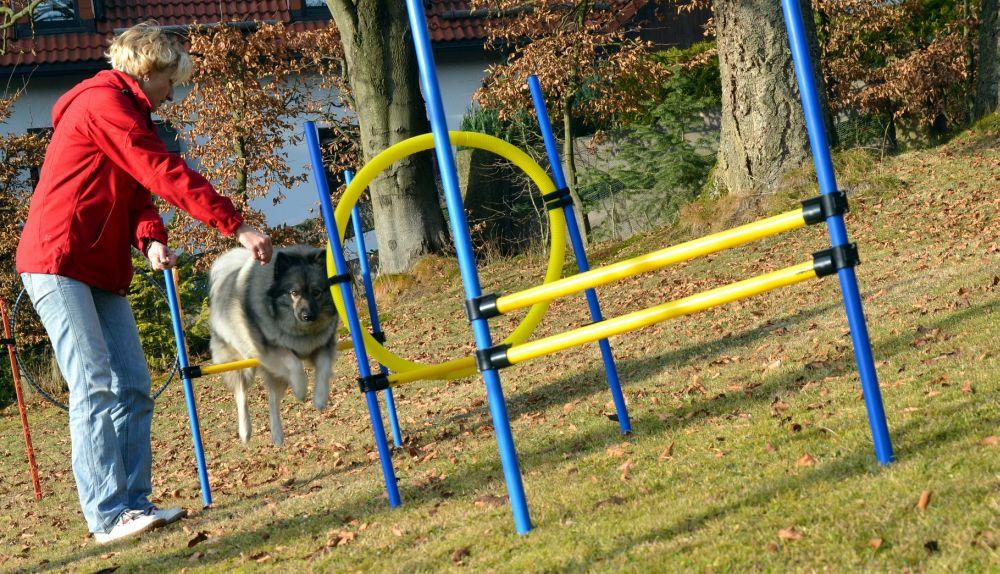 Cani di agilità sport salto occupazione Spitz