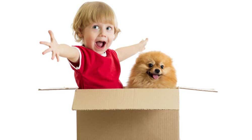 Spitz und Junge in einer Box