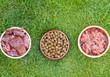 Diverse varietà di cibo per cani sul prato verde