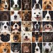 Muso di cane - collage