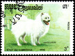 CAMBODIA - CIRCA 1990: postage stamp, printed in Cambodia, shows a Samoyed Dog