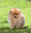 Cucciolo su erba verde