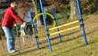 I cani da agilità fanno sport